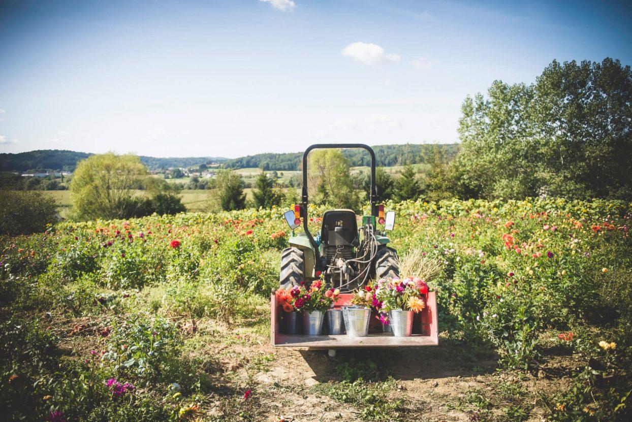 ein Blumenfeld am Hügel mit einem Traktor